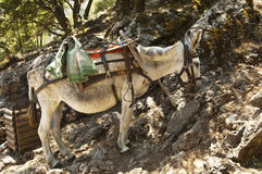 Donkey in Greece Royalty Free Stock Image