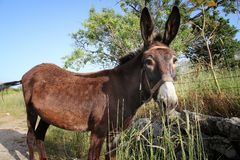Donkey in Greece royalty free stock photos