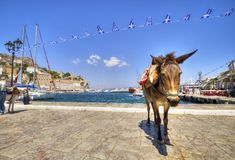 Donkey on Greek island. A donkey on the Greek island, Hydra. Donkeys are the only means of transport on the island, no cars are allowed Royalty Free Stock Photo