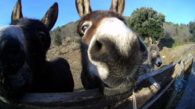 Donkey. Group of donkeys living outside by the river Stock Photos