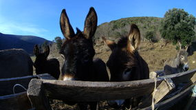 Donkey. Group of donkeys living outside by the river Royalty Free Stock Image