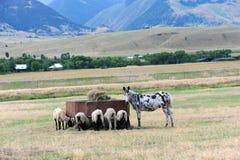 Donkey Guard Royalty Free Stock Photos