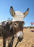 Donkey a hat Stock Photography