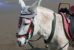 Donkey with hat Royalty Free Stock Image