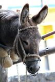 Donkey head Royalty Free Stock Photography