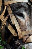 Donkey head royalty free stock photo