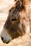 Donkey head Stock Photography