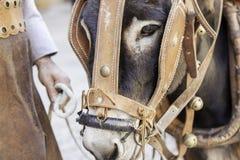 Donkey head Royalty Free Stock Photos