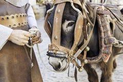 Donkey head Royalty Free Stock Images