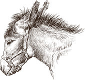 Donkey head Royalty Free Stock Images