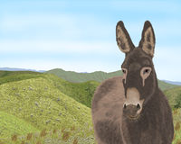 Donkey hills Royalty Free Stock Photography