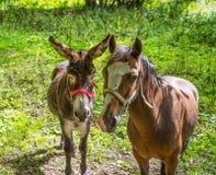 Donkey and horse close-up royalty free stock photography