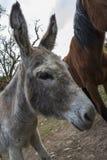 Donkey and horse Royalty Free Stock Photos