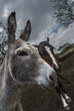 Donkey and horse Royalty Free Stock Image