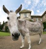 Donkey house Stock Photo