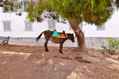 Donkey at Hydra island Greece Royalty Free Stock Photo