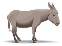 Donkey illustration royalty free stock images