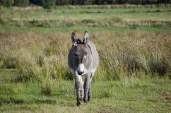Donkey in ireland stock photos