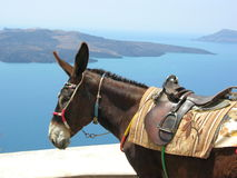 Donkey on a island. A working donkey takes a break on the Greek island of Santorini. A volcano is in the background at sea royalty free stock photos