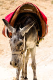 Donkey in Judean Desert Royalty Free Stock Photos