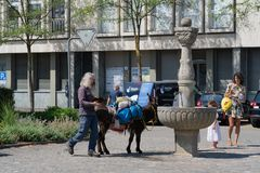 Donkey drinking water at Jugendfest Brugg stock images