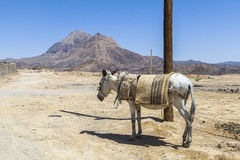 Donkey in Kharanagh Village, Iran Stock Photography