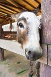 Donkey look at the camera stock photography