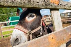 Donkey looks Stock Photos
