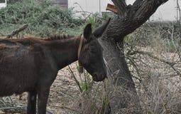 Donkey mammal animal Stock Photos