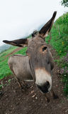 Donkey in meadow Stock Photos