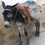 Donkey in Medina of Fez Stock Photo