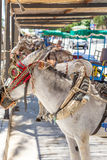 Donkey in Mijas Royalty Free Stock Images