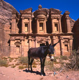 Donkey at the Monastery, Petra Stock Photos