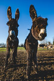 Donkey mother and son. Donkey mother and her little puppy stock images