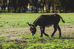 Donkey mother and son. Donkey mother and her little puppy royalty free stock photos