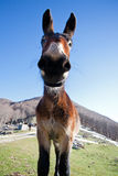 Donkey in the mountains Stock Photos