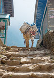 Donkey in mountains in the village,Nepal Royalty Free Stock Photo