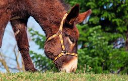Donkey, Mule, Animal Stock Photos