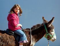 Donkey mule with kid little girl riding happy. Smiling on blue stock photo