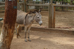 Donkey in Natural Park Royalty Free Stock Images