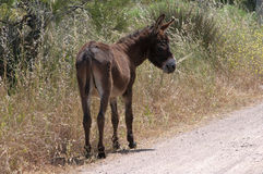 Donkey on Nature Reserve at Skala Kalloni Lesvos Greece Royalty Free Stock Images