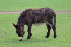 Donkey. In the nature view in the distance Royalty Free Stock Photography