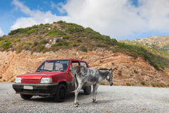 Donkey near the old red car in the mountains on the Royalty Free Stock Photos