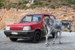 Donkey near the old red car  on the road Stock Images