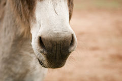 Donkey nose and whiskers Royalty Free Stock Image