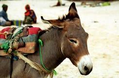 Donkey, Nouakchott, Mauritania Royalty Free Stock Photo