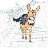 Donkey in Oia, Santorini Royalty Free Stock Photo