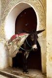 Donkey in Old Medina, Marocco Stock Photo