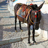 Donkey on old stone stairs in Oia, Santorini Royalty Free Stock Photography
