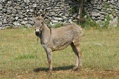 Donkey On The Field Royalty Free Stock Photos